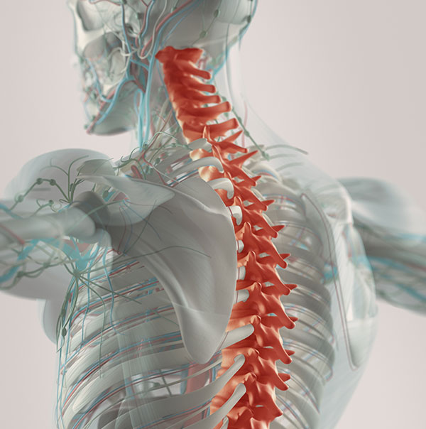 Spinal-Injury